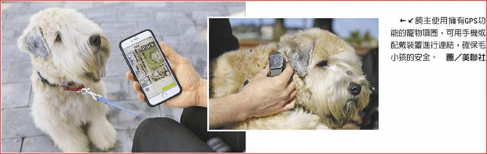 ←↙飼主使用擁有GPS功能的寵物項圈,可用手機或配戴裝置進行連結,確保毛小孩的安全。圖/美聯社